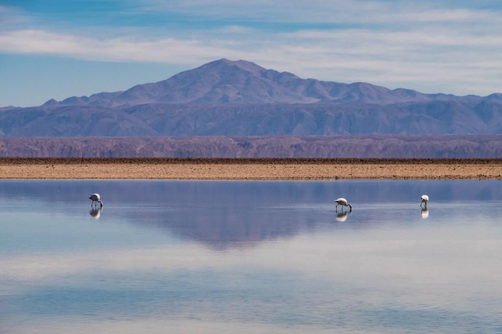 flamingos in san pedro de atacama travel guide