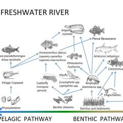 Freshwater Biomes Food Chain Diagram Sony Cdx Gt25 Wiring Trophic Structure Plum Island Ecosystems