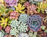 array of succulant flowers