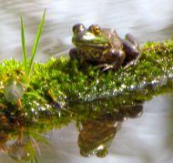 Pond resident