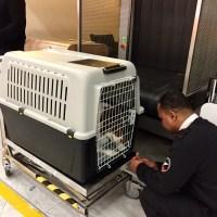 Comment prendre l'avion avec son chien ?
