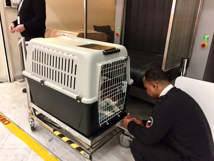 prendre l'avion avec son chien : bagage hors-format