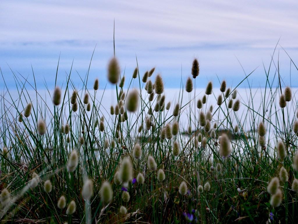 lagune ovale bord de mer