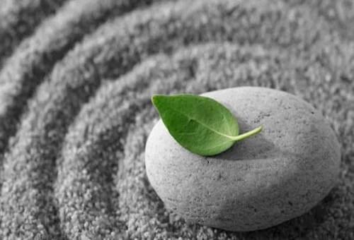 Listek na kamieniu.