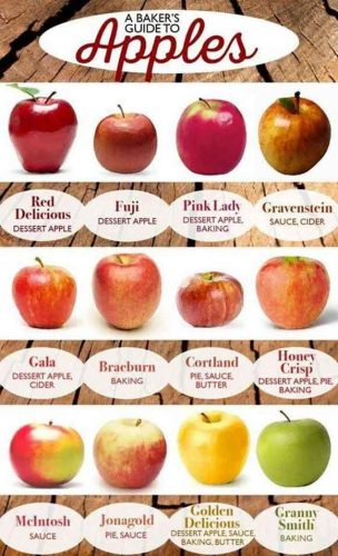 chart of different varieties of apples