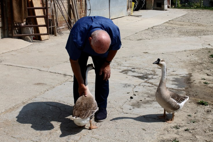 Giovanni Corino and the Geese