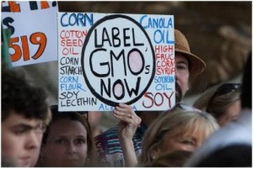 label gmo now