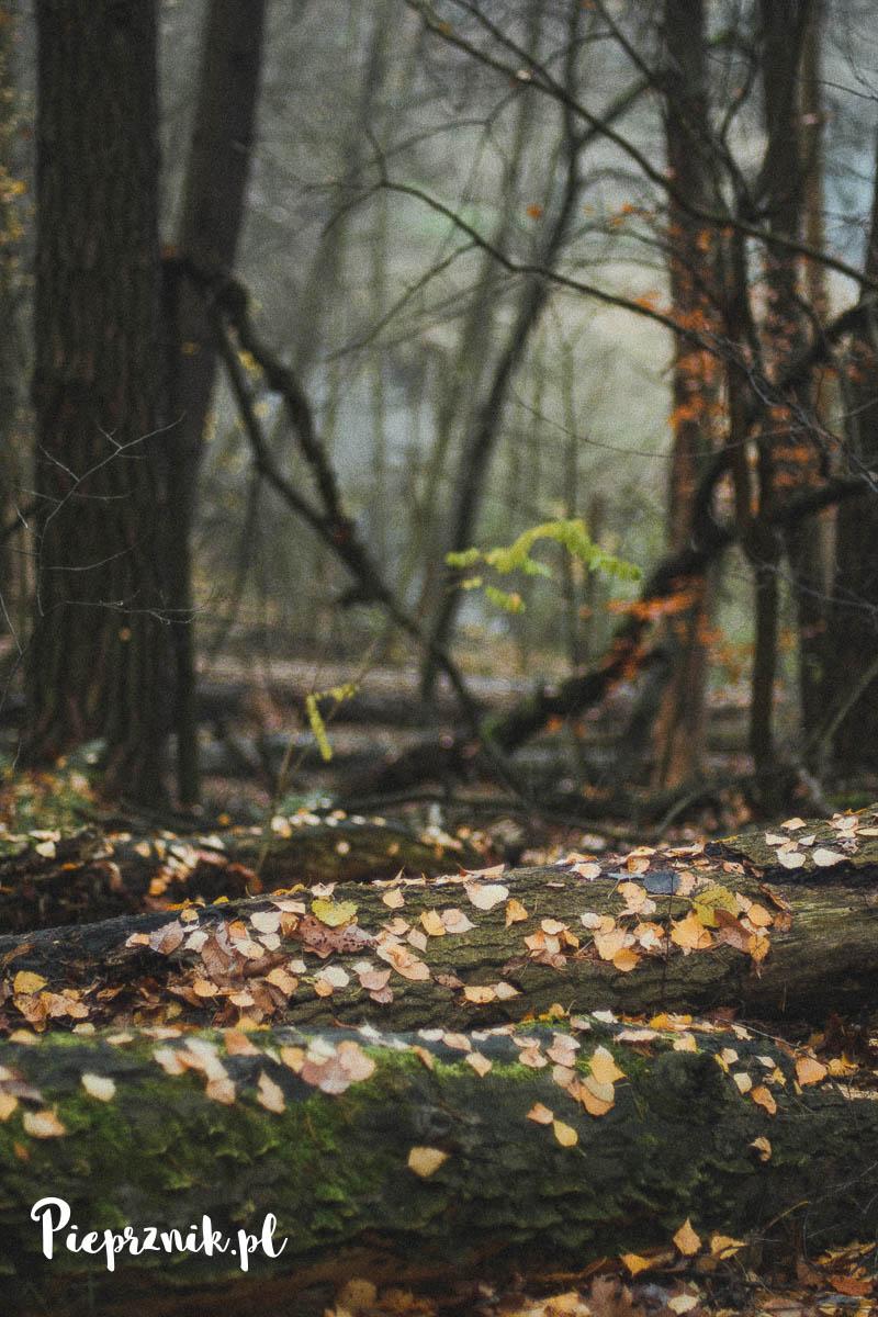 Listopad w lesie