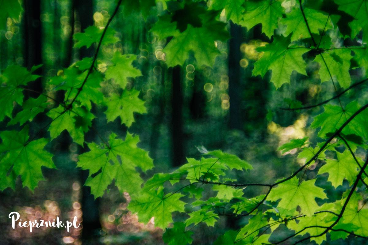 Majowy las