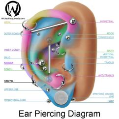 Cartilage Piercing Diagram 2007 Freightliner M2 106 Wiring Ear Piercings Guide: 17 Types Explained (pain Level, Price, Photo)