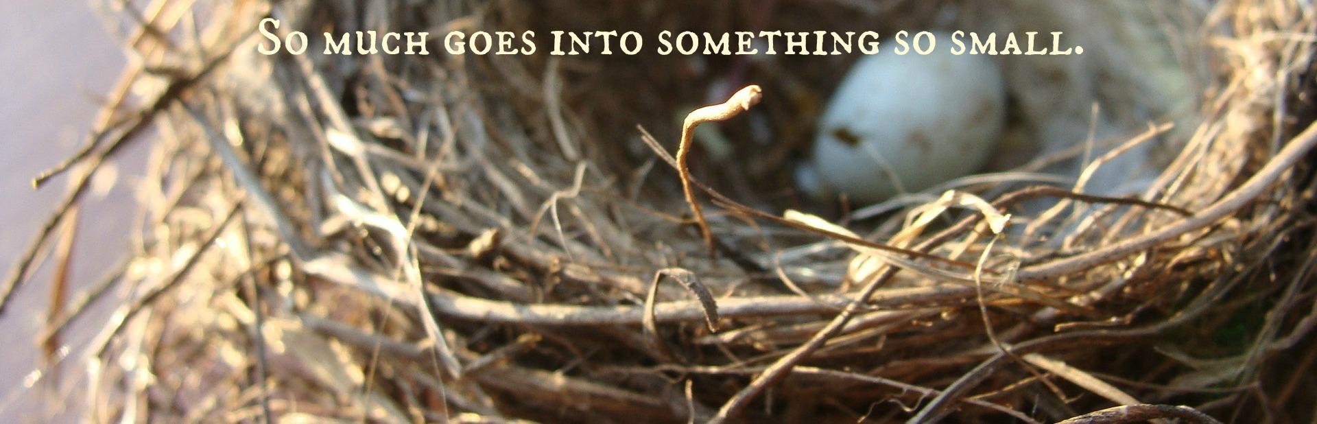 bird-egg-home-88121