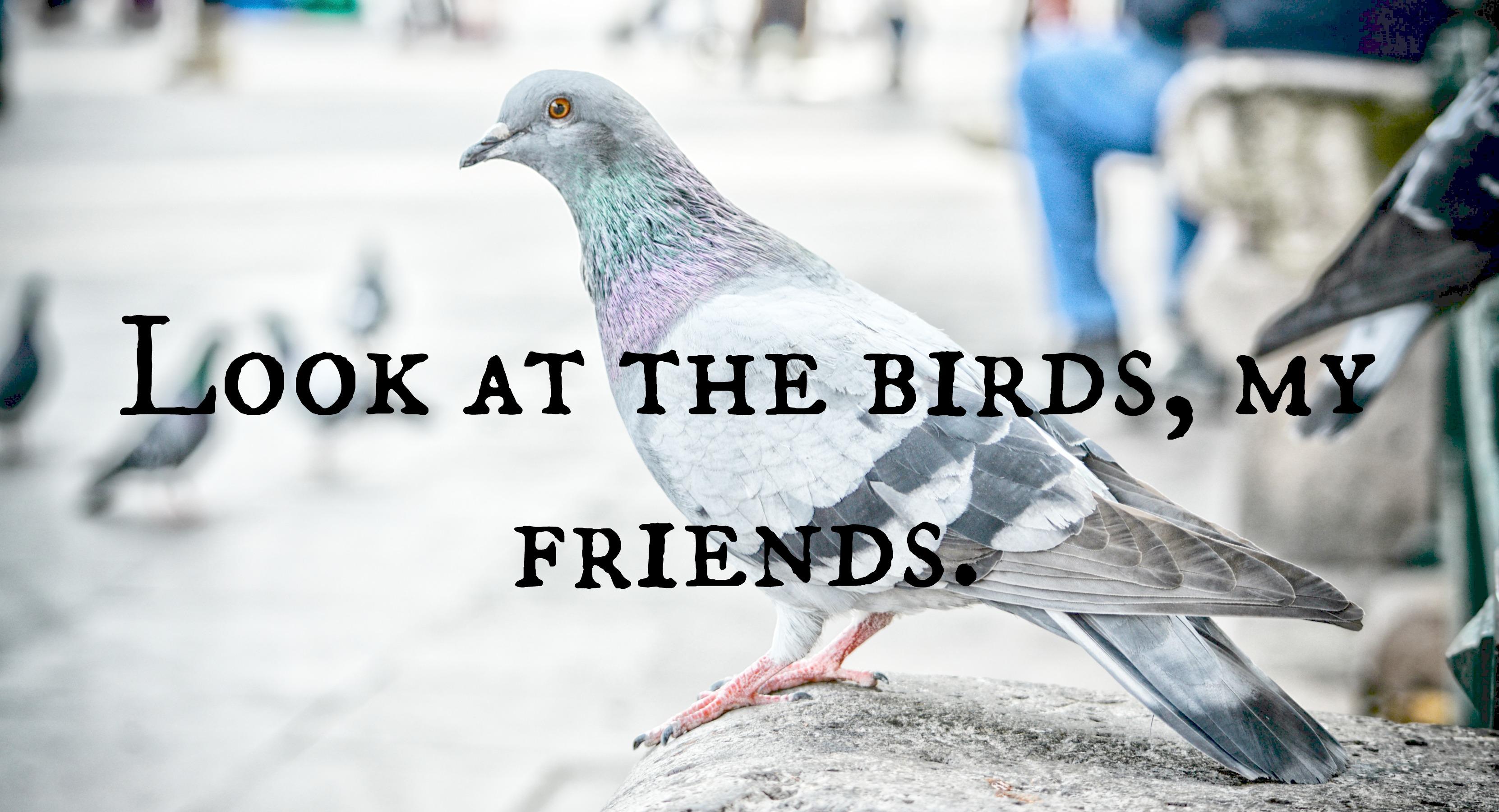 animal-avian-beak-763197