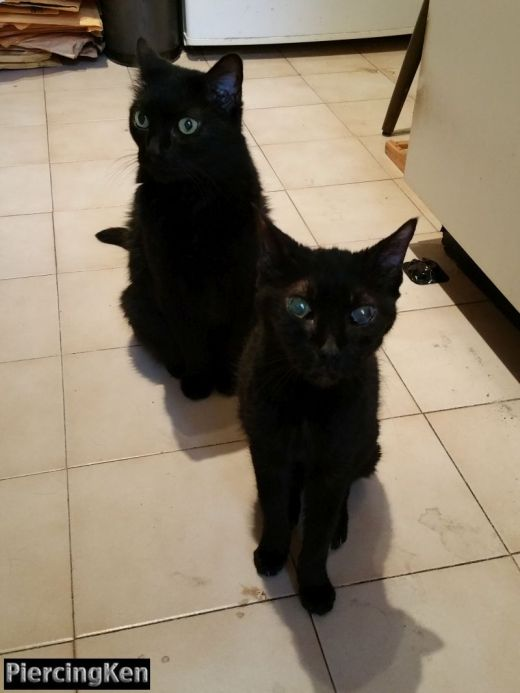 blackcats_081715_01