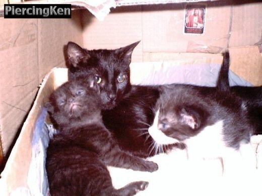 kittens_041602_01