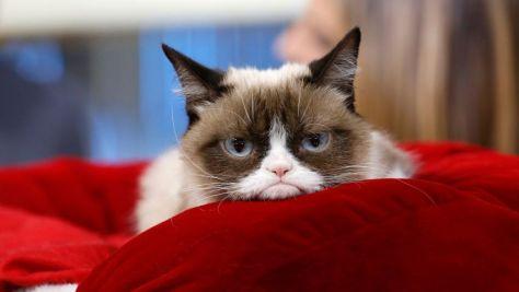 grumpy cat, tartar sauce