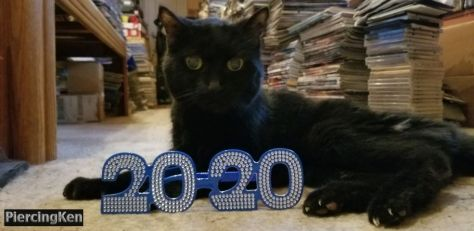 spooke the cat, happy new year, new year's day