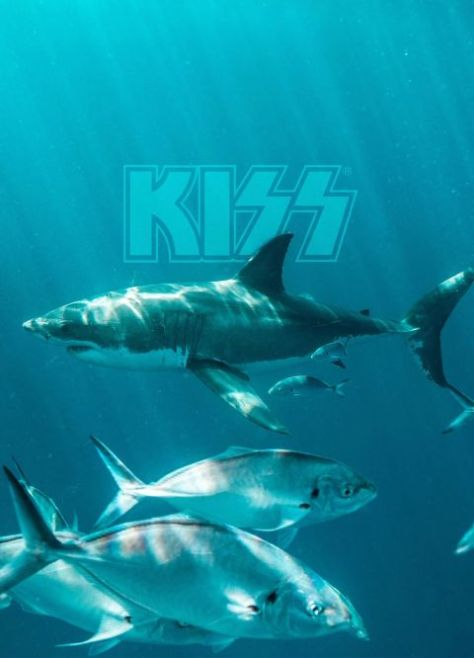 show posters, kiss, kiss show posters