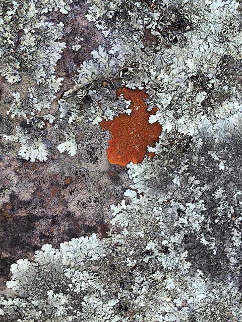 Bolivia Lichen