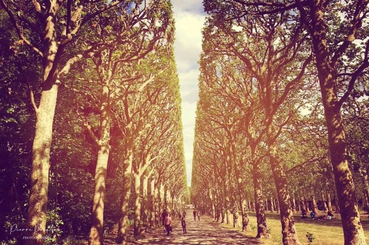 Photographie d'une allée du Parc de Sceaux.