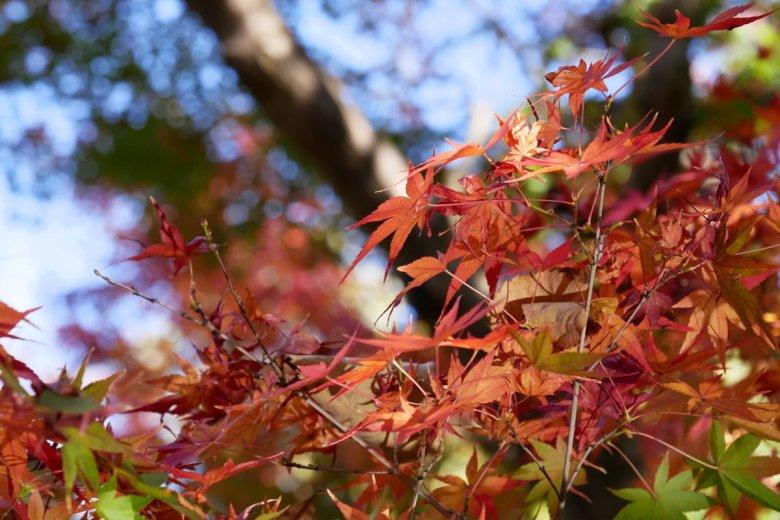 奈良 依水園
