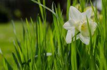 Green Flower - Ref. B10