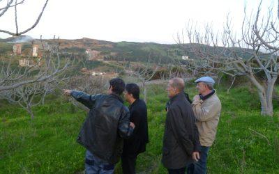 Consultation en Algérie