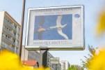 Affiche exposition photos Pierre Gleizes galerie du Lion a Orleans Sauve qui Veut