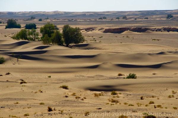 Sand dune and desert landscape with trees in the Sahara desert, Morocco