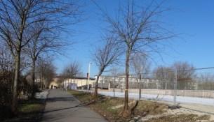 Drewag Baumfällen 1402