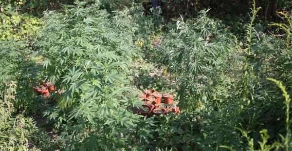 polizei cannabis uebigau