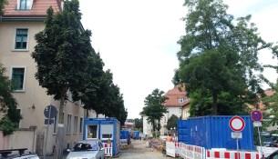Coswiger Straße Robinien