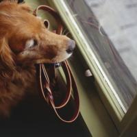 Osiem godzin samotności - jak pokonać psią nudę?