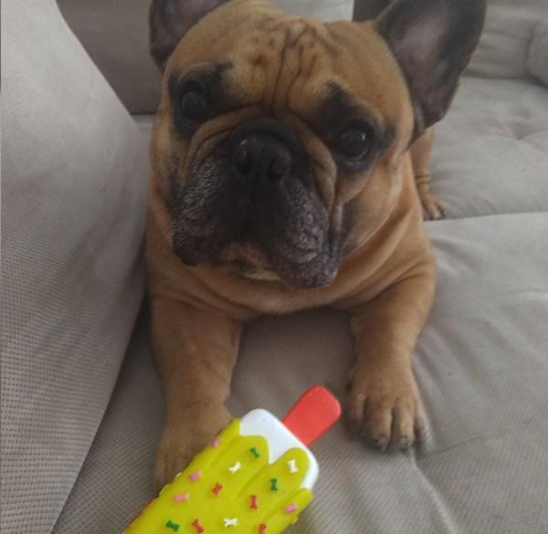 Zabawka gryzak dla psa - lód na patyku