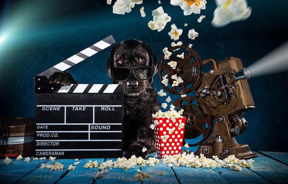 Otwarcie kina dla psów w Warszawie!