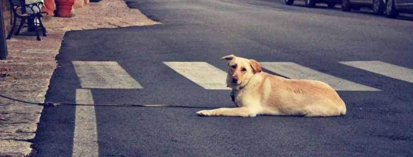 bezpieczny pies