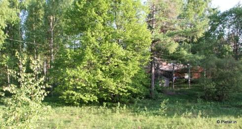 Etualalla on iso puu, toisella puolella naapurit.