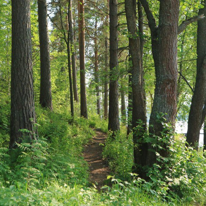 Polku metsään.