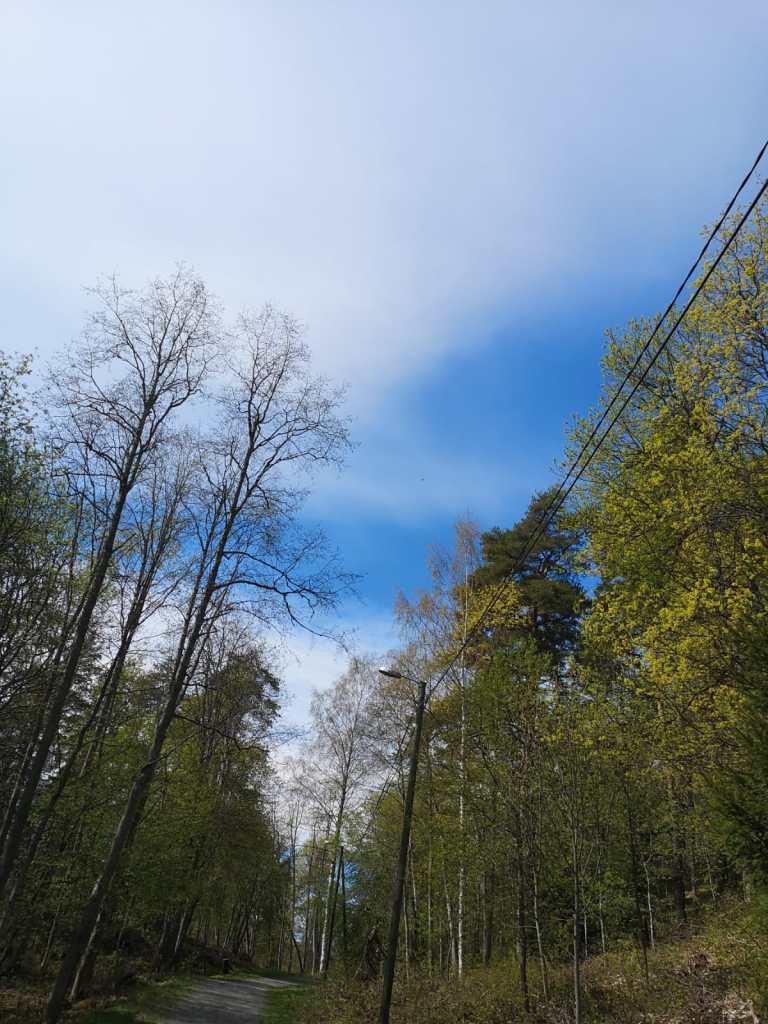 Metsä,taivas ja tie.