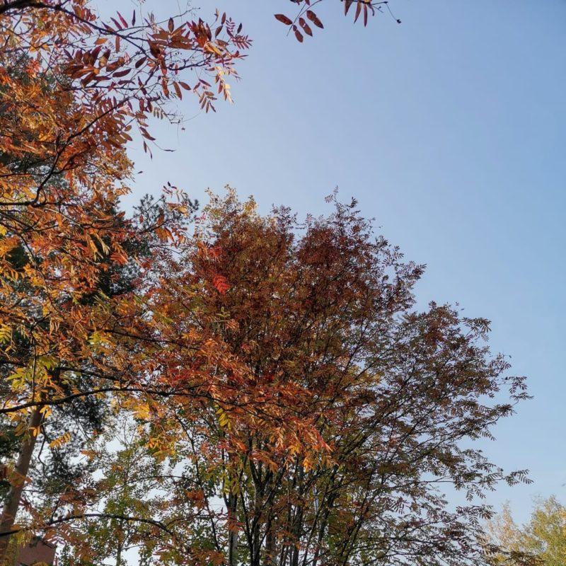 Syksyn värit näkyvät puissa.
