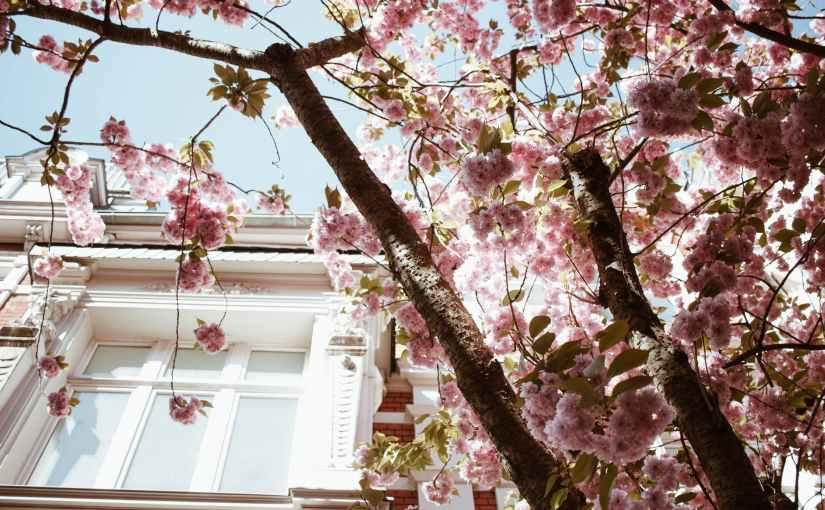 …quello che la primavera fa con i ciliegi
