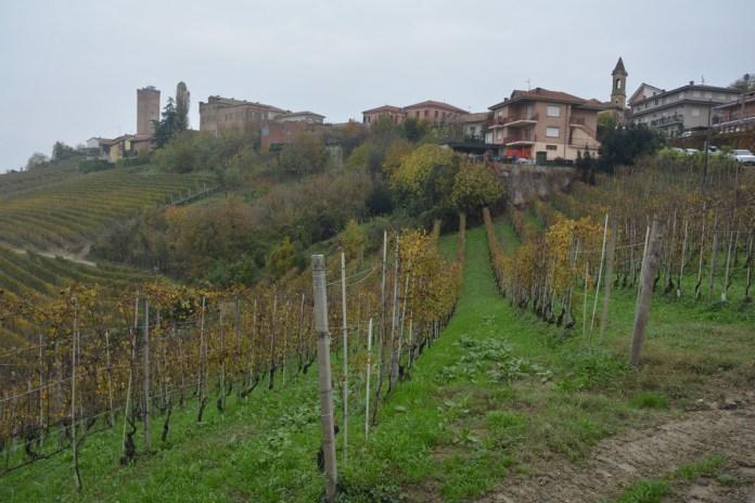 langa del barbaresco colline vigneti vino
