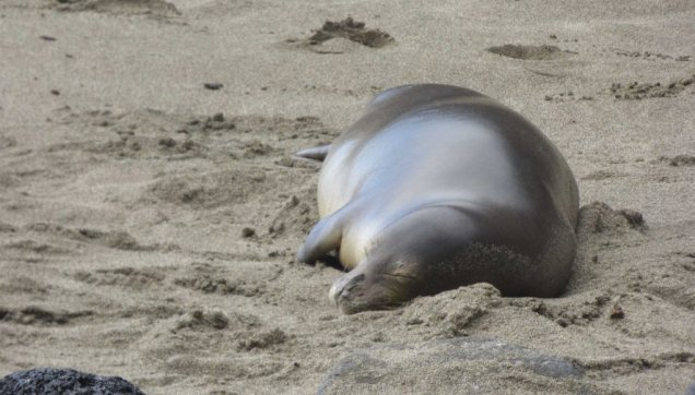 Maybe I'm anthropomorphizing, but I think that not only is this seal sleeping, it's happy.