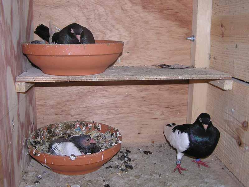 Pigeonnier fixe