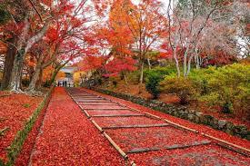 【2020年11月】秋から冬に入るのにも激しい雨が降ると気温が変わるのが日本の傾向なのだろうか? 第4週と5週のまとめ【4週&5週まとめ】
