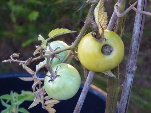 Growing Fruit and Vegetables – September