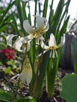 flower5(apr17)