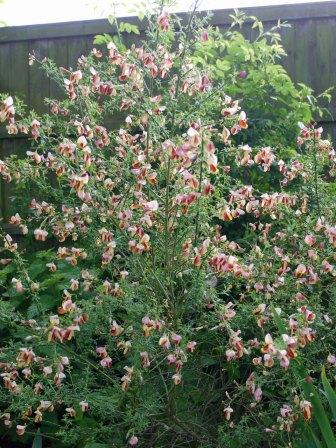 garden2(may17)