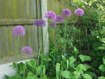 garden3(may17)