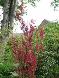 garden9(may17)