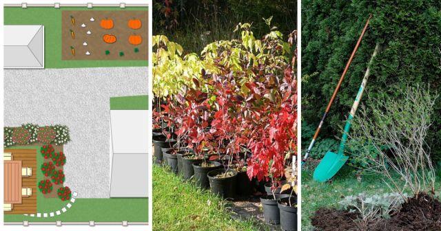 Helppohoitoinen piha haaveissa? Näin valitset oikeat kasvit!